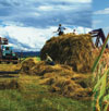 Betting on the Russian Farm