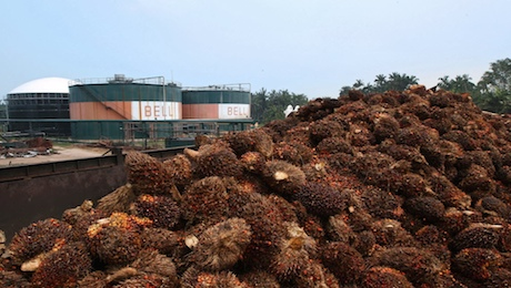 The Malaysian Palm Oil Industry Is on Fire in More Ways Than One