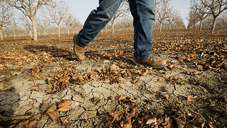Drought-Wracked California Turns to Investors for Help