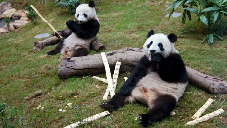 China and Conservation: Kung Fu Panda Saves the Planet