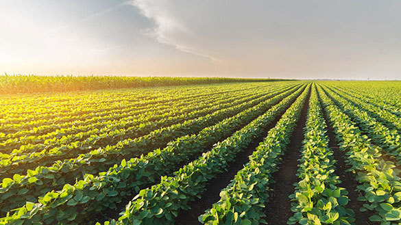 Weather, Trade Provide Challenges to Higher Soybean Demand