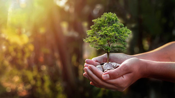 The New Market for Carbon Offsets