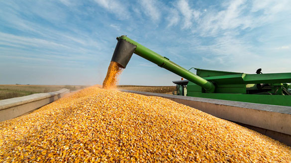 As Demand for Corn Grows, New Key Data Points to Watch