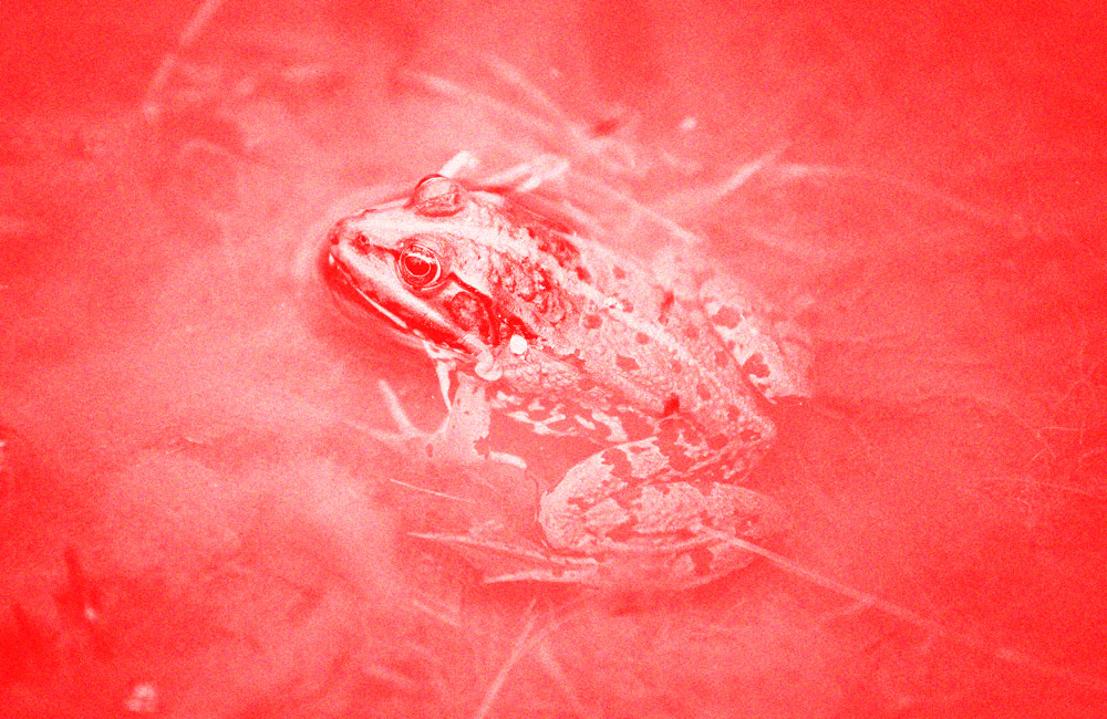 The Frogs Are Getting Bigger In Wealth Management